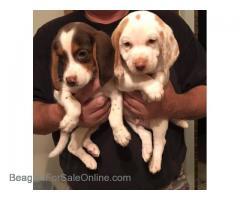 100% Patch Pups